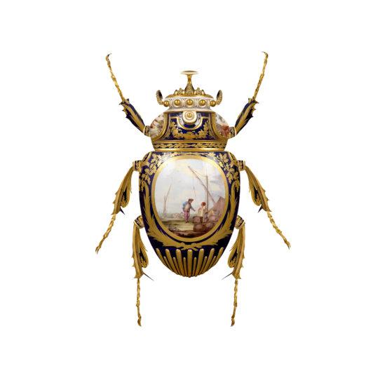 Sevres Goliathus Scarabaeidae