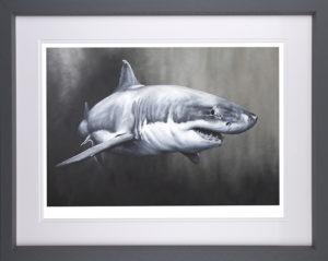dean martin shark