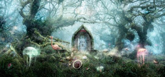 The Open Door by Mark Davies