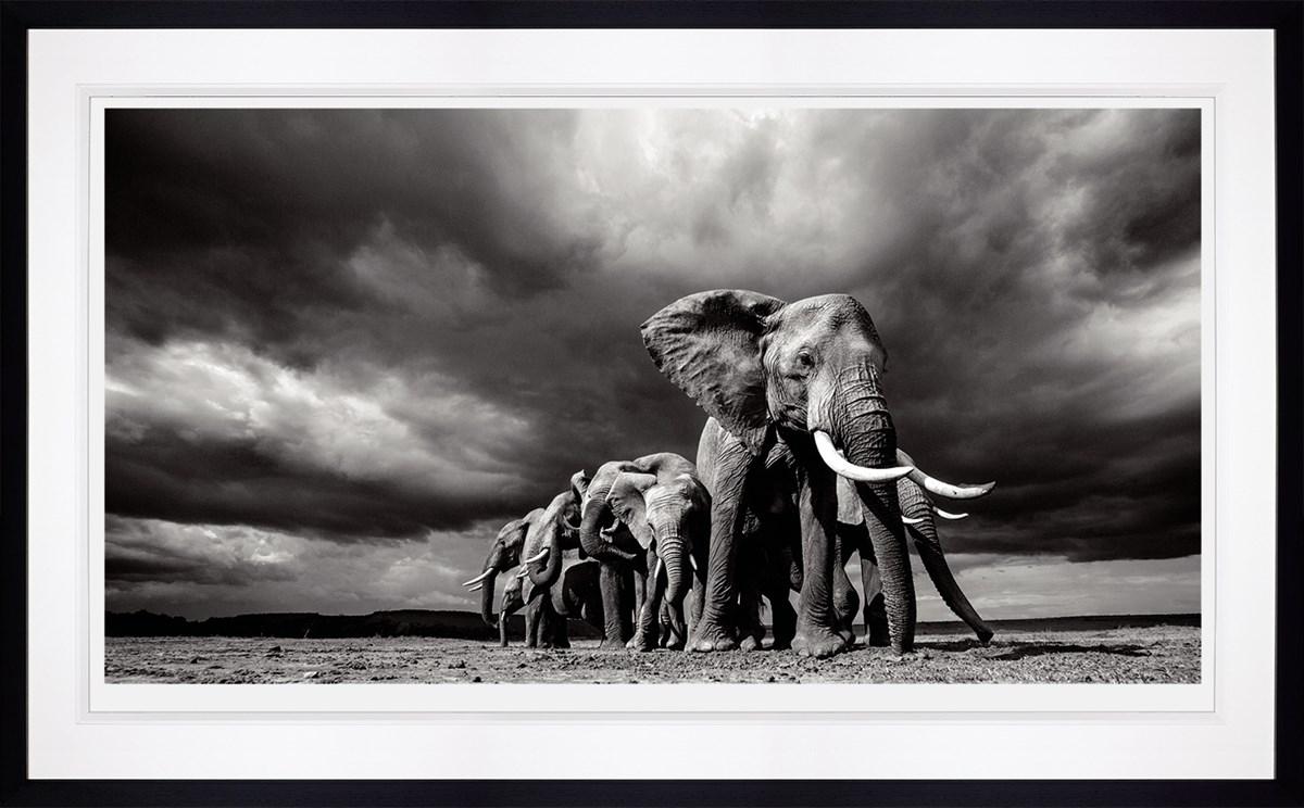 framed elephat
